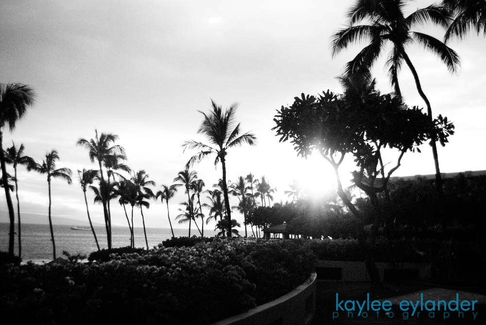 maui bw 11 copy1 My Search for the Best Palm Tree....In Maui, Hawaii.