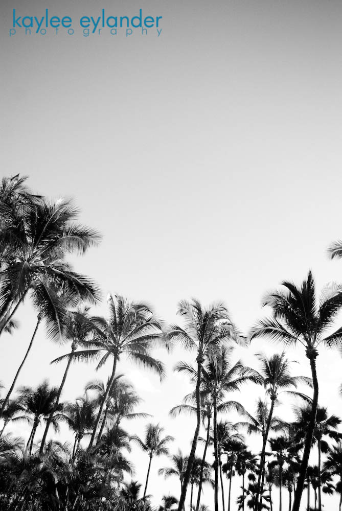 maui bw 14 copy1 My Search for the Best Palm Tree....In Maui, Hawaii.