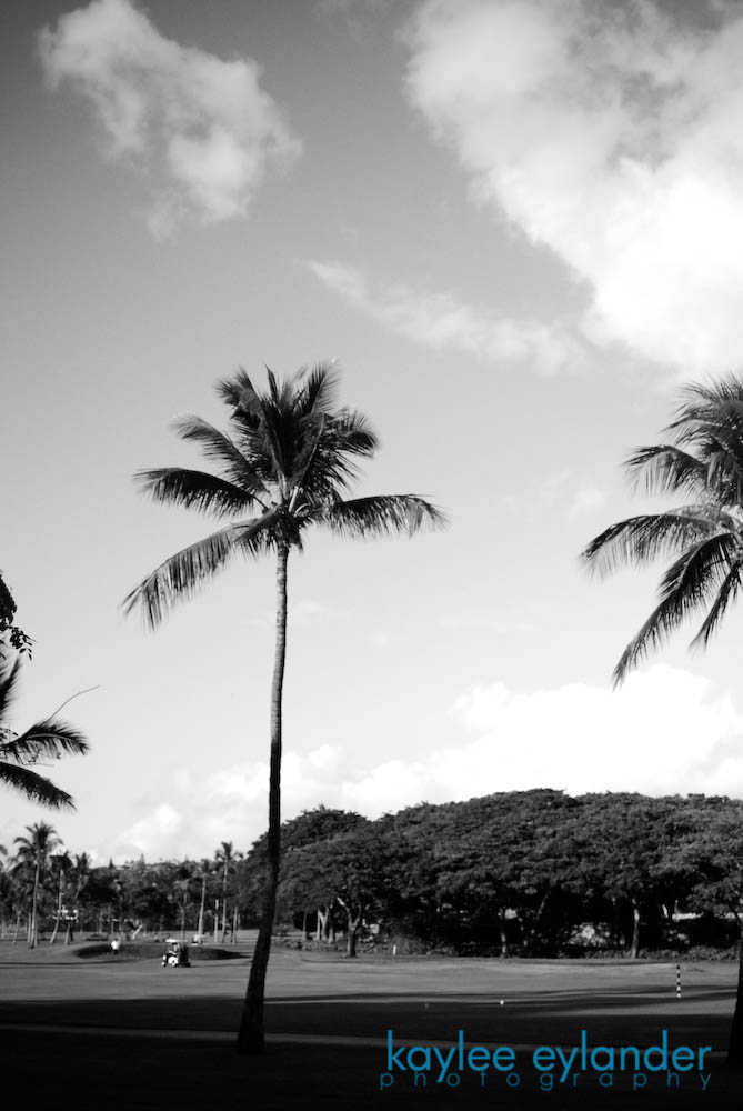 maui bw 151 My Search for the Best Palm Tree....In Maui, Hawaii.