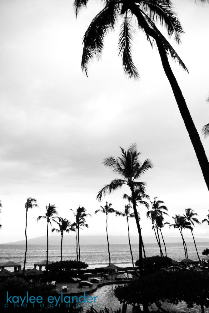 maui bw 9 copy1 My Search for the Best Palm Tree....In Maui, Hawaii.