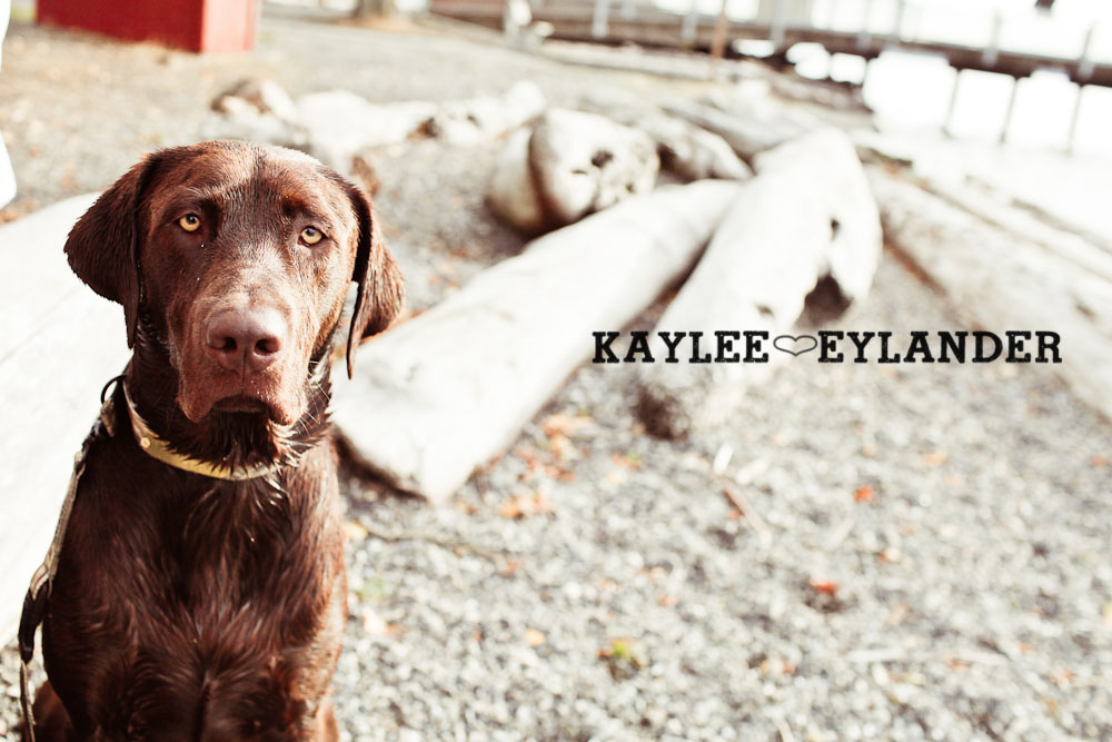 18 Beach Engagement Session | Kayak Point with a sweet chocolate lab...and 2 peeps in love