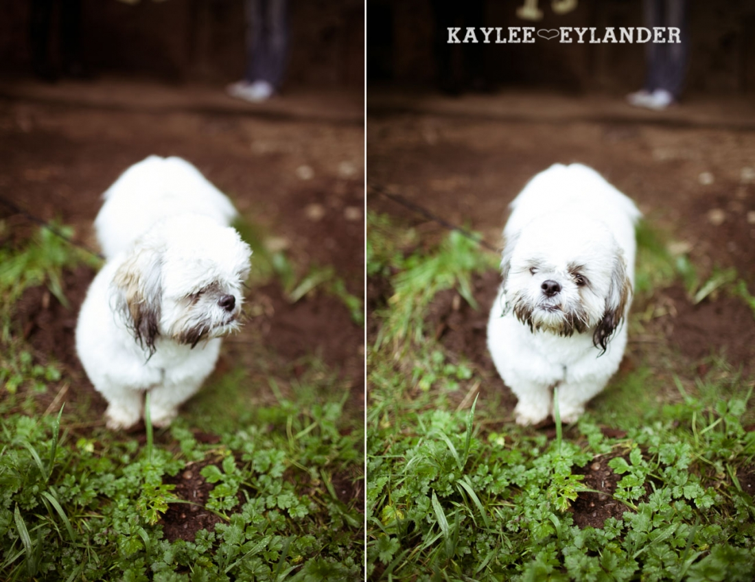 Rustic Outdoor Engagement session kaylee eylander 2 1100x848 Rustic Outdoor Engagement Session | Hurley is a good pup